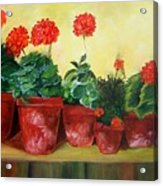 Geraniums In A Row-- Sold Acrylic Print