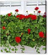 Geraniums On Window Acrylic Print by Elena Elisseeva