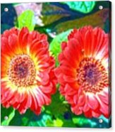 Gerbera Couple Acrylic Print