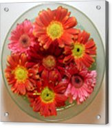 Gerbera Daisies - From Above Acrylic Print