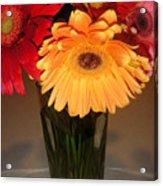 Gerbera Daisies - Vased Acrylic Print