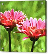 Gerbera Daisies To Brighten Your Day Acrylic Print