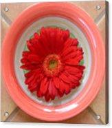 Gerbera Daisy - Bowled On Tile Acrylic Print