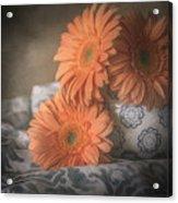 Gerbera Daisy Trio Acrylic Print