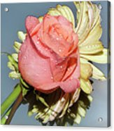 Gerbers With The Rose Acrylic Print