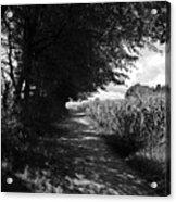 German Path Black And White Acrylic Print
