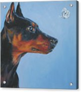 German Pinscher Acrylic Print