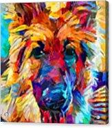 German Shepherd 6 Acrylic Print