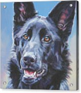 German Shepherd Black Acrylic Print