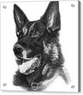 German Shepherd Head Acrylic Print