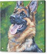 German Shepherd Head Study Acrylic Print