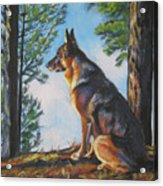 German Shepherd Lookout Acrylic Print by Lee Ann Shepard
