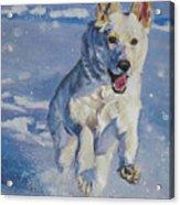 German Shepherd White In Snow Acrylic Print by Lee Ann Shepard