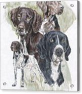 German Shorted-haired Pointer Revamp Acrylic Print