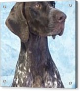 German Shorthaired Pointer 663 Acrylic Print