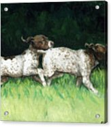 German Shorthaired Pointer Pups Acrylic Print