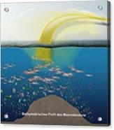 Geruchssinn Von Eissturmvoegeln - Procellariidae  Acrylic Print