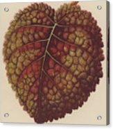 Gesnera Cinnabarina Acrylic Print