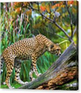 Getting The Scent Acrylic Print