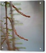 Getty Fern 01 Acrylic Print
