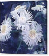 Ghost Flowers Acrylic Print