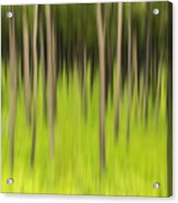 Ghostly Forest Acrylic Print