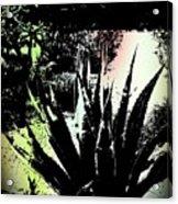 Giant Agave Acrylic Print
