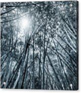 Giant Bamboo In Forest With Sunflare, Black And White Acrylic Print