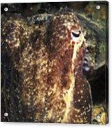 Giant Cuttlefish Camouflage Acrylic Print