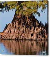 Giant Cypress Tree In Reelfoot Lake Acrylic Print