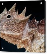 Giant Horned Lizard Acrylic Print