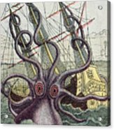 Giant Octopus Acrylic Print by Denys Montfort