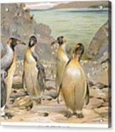 Giant Penguins, C1900 Acrylic Print