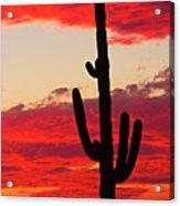 Giant Saguaro  Southwest Desert Sunset Acrylic Print