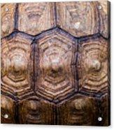 Giant Tortoise Carapace Acrylic Print