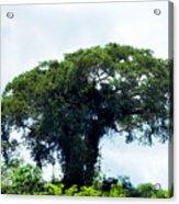 Giant Tree In Amazon Skyline Acrylic Print