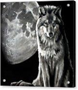 Gibbous Wolf Acrylic Print
