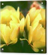Gift Of The Cacti Acrylic Print