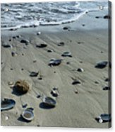 Gifts From The Ocean Acrylic Print