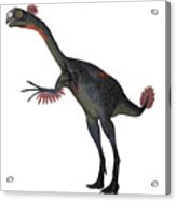 Gigantoraptor Dinosaur On White Acrylic Print