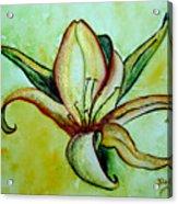 Gilded Lily Acrylic Print