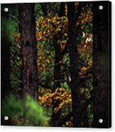 Gilded Visions Acrylic Print
