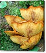 Gilled Fungus Acrylic Print