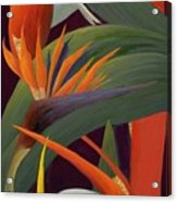 Ginger And Bird Of Paradise Acrylic Print