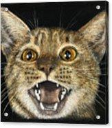 Ginger Cat Eyes Acrylic Print