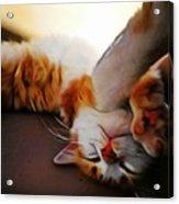 Ginger Feline Acrylic Print