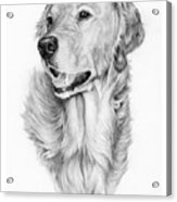 Ginger Acrylic Print