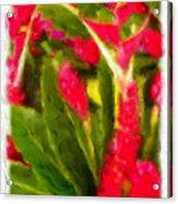 Ginger Plants On Kauai Acrylic Print