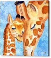 Giraffe Baby And Mother Acrylic Print