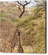 Giraffe Camouflage Acrylic Print